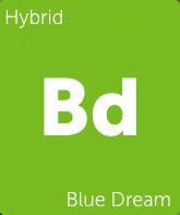 Blue Dream (BB)