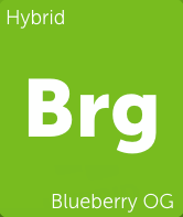 Blueberry OG