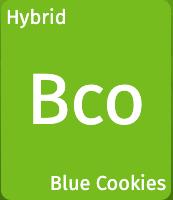 Blue Cookies (SC)