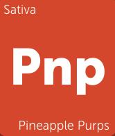 Pineapple Purps