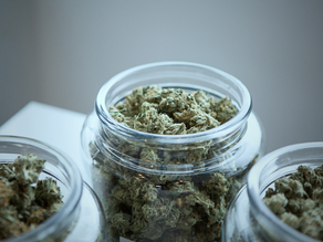 Medical Marijuana Leads To Reduced Opioid Use, New Study Finds