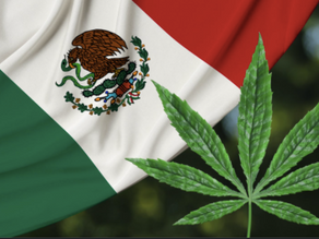 Mexican Soldiers Find 43-Acre Cannabis Farm, Enough to Make 11 Tons of Drug