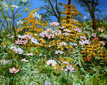 Cosmos and wildflowers