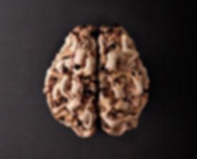 cervello.jpg
