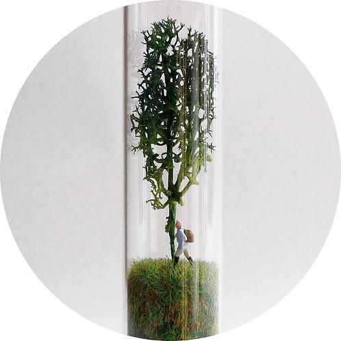 Naturalezas Envasadas. Man and Tree