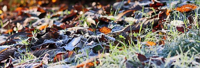 Frost, Ground