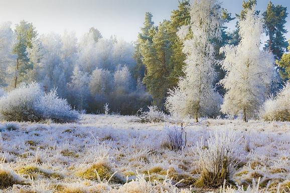 Frost, Hoar