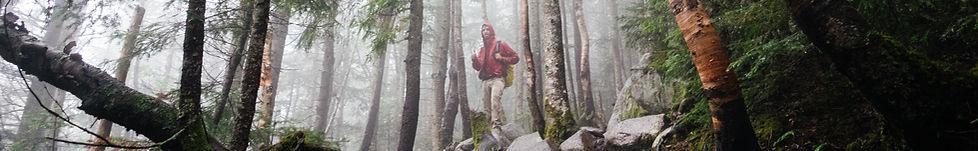Fog ile Woods