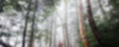 Woods mit Nebel
