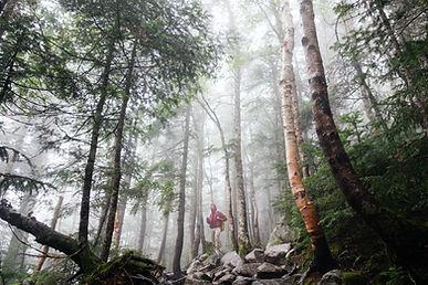 sylvothérapie, bain de forêt