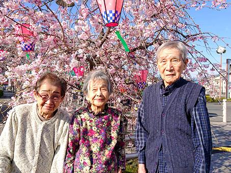 施設の周辺が桜でいっぱい