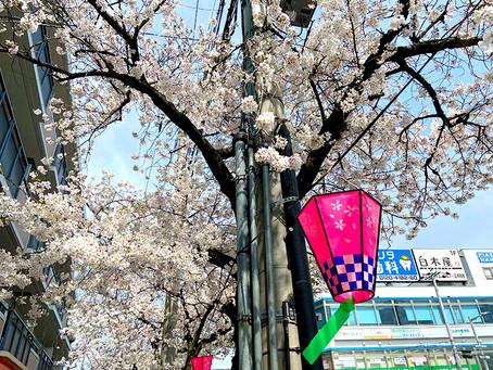施設の前が桜満開