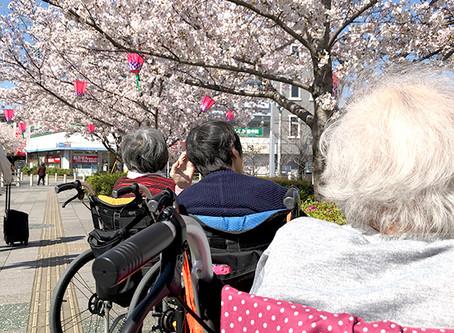 今年もケア・ブリッジ河内花園の周辺は桜が満開です!