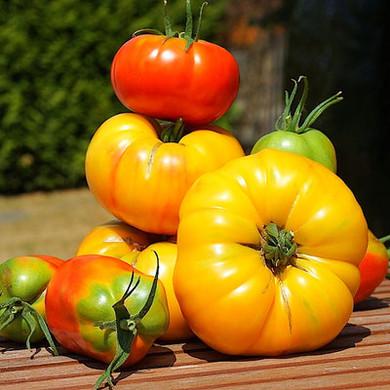 Petersland Waldviertler Tomaten