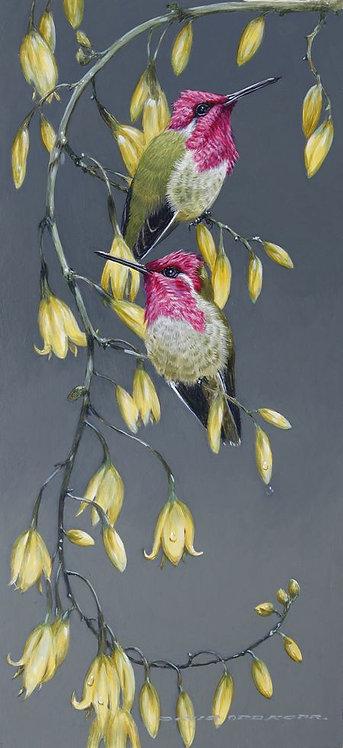 Annas Hummingbirds