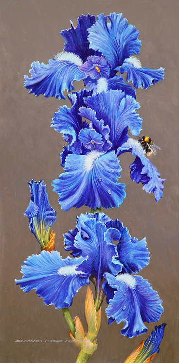 Blue Iris