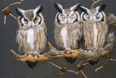 White Faced (Scops) Owls