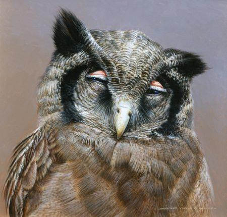 Verreaux's Eagle Owl 1