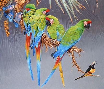 Buffon's Macaws