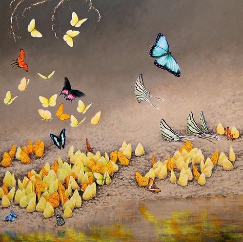 Amazon Butterflies