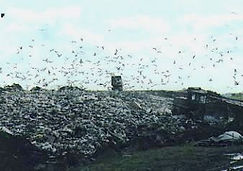 Landfill tip with seagulls
