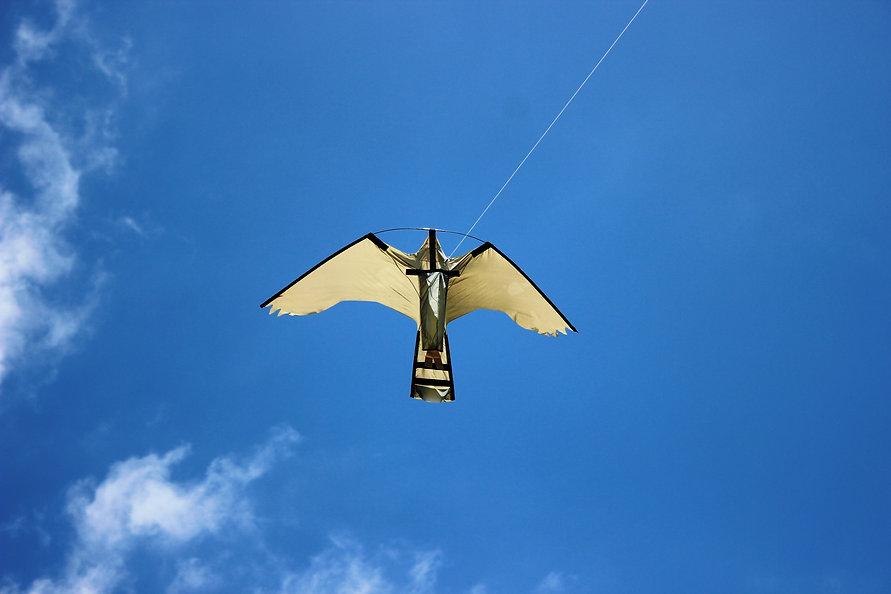 Professional bird deterrent kites