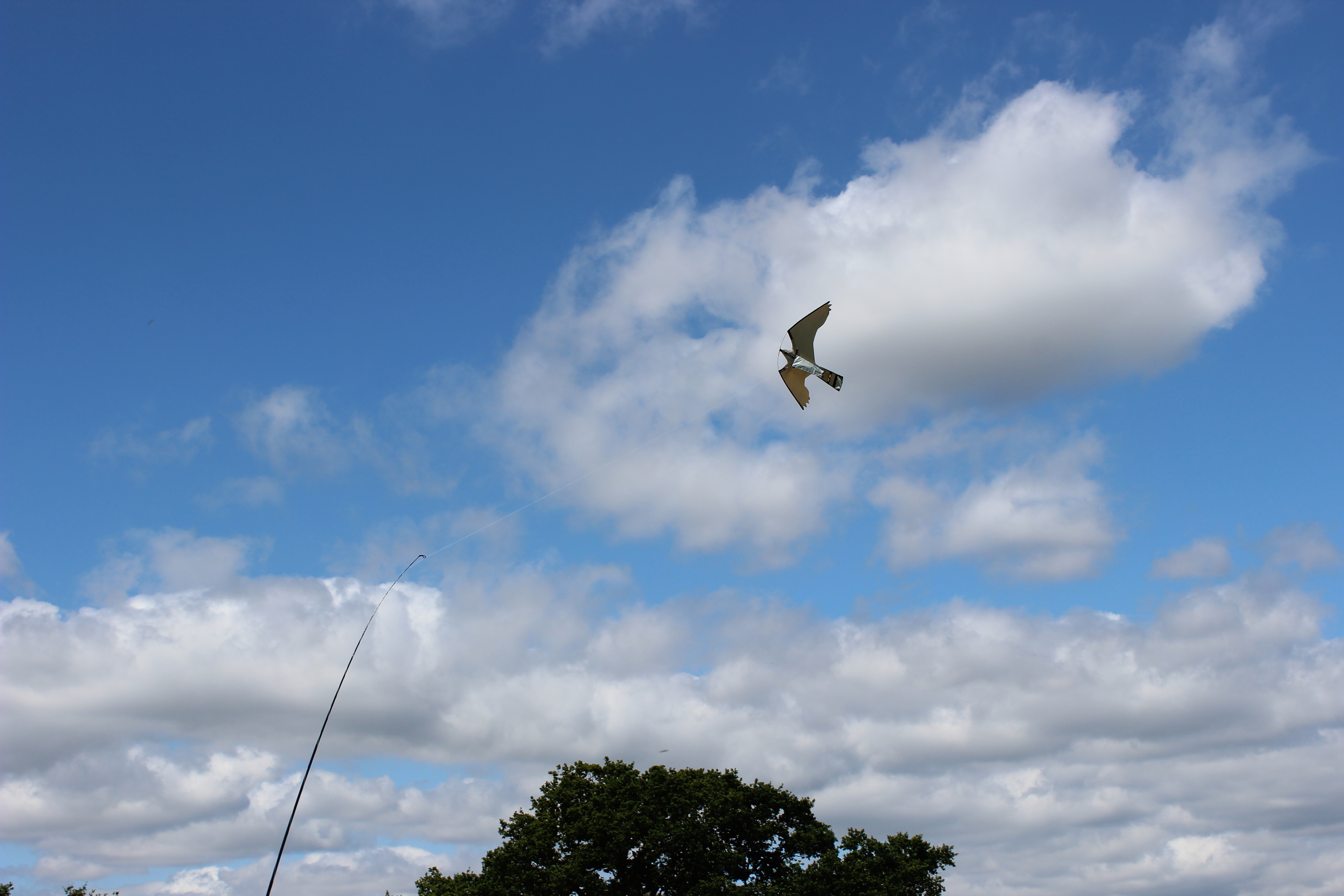Exeter Falconry