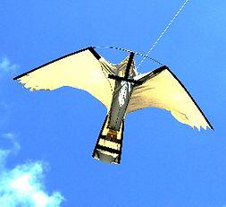 Peregrine Hawk Kite_edited_edited_edited