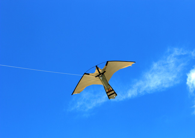 BIRDS CONTROLLED by PEREGRINE PRO KITE