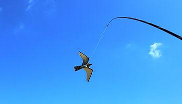 Bird Control, Seagull Deterrent