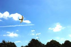 Newcastle Falconry