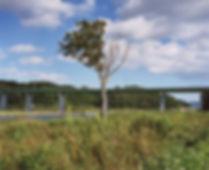 Tohoku tree picture taken by Naoya Hatakeyama
