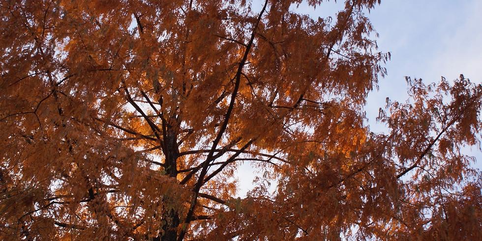 Accueillir l'automne et l'hiver