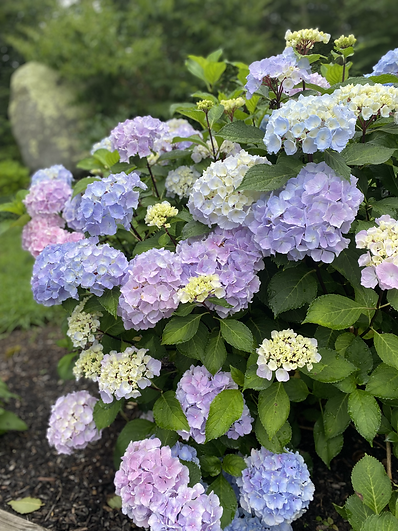 Flowers2.heic