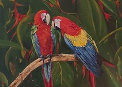 Papigi-akril