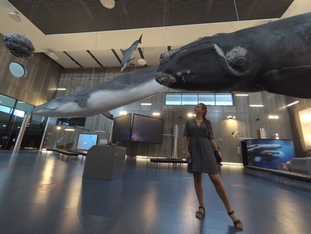 An eerie but instructive history in The Whale Museum in Caniçal