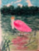 Spoonbill.jpg