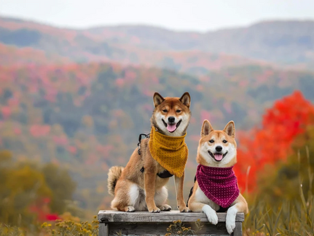 6 Canadian Bandana Companies To Spoil Your Pup This Holiday Season!
