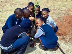 Gardening in Johannesburg