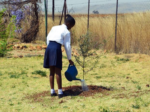 Tree planting in Johannesburg