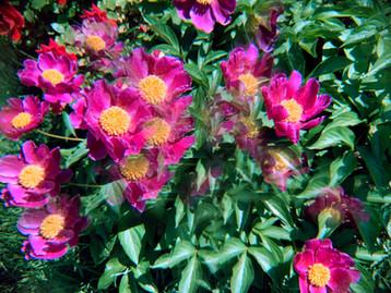 Scope Flowers, 2021_