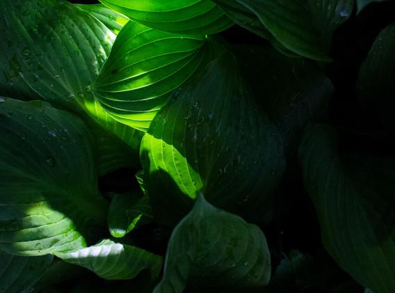 Plantscape, 2020.