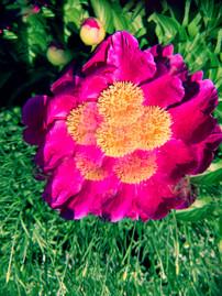 Scope Flower, 2021_
