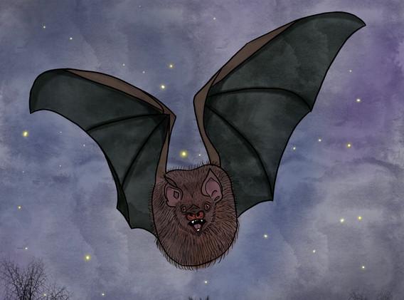 Anxious Bat, 2021