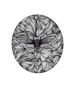 Cicada, 2021.