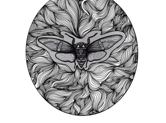 Cicada, 2021_