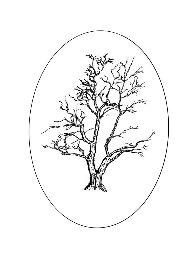 Tree 1_