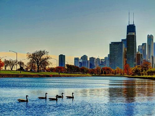 Chicago Ducks