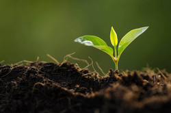 Croda sustainability environmental impac