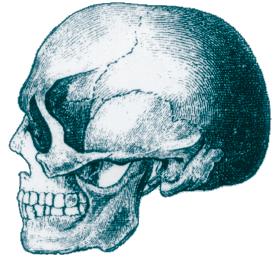 skull_01.png